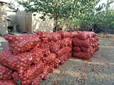Другие продукты питания - Кыргызстан: Пияз пияз лук лук оптом !!! 15тон есть мы находимся в Баткене Кара Бак