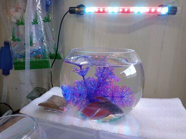 Продается рыбка с аквариумом