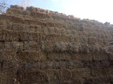 Семена и уличные растения - Сокулук: Продаются тюки сено горные