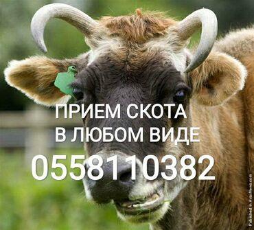 539 объявлений   ЖИВОТНЫЕ: Прием в колбасный цех коровлошадейбычковтелоклюбой упитанностилюбого