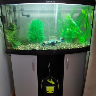 fotoaparat aksesuarlari - Azərbaycan: Akvarium Aquael BRILLUX Bio 80 oval (102l) 80x35x40 Tumba və