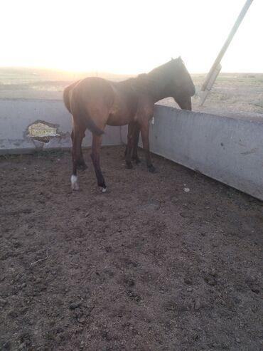 Животные - Сретенка: Лошади, кони