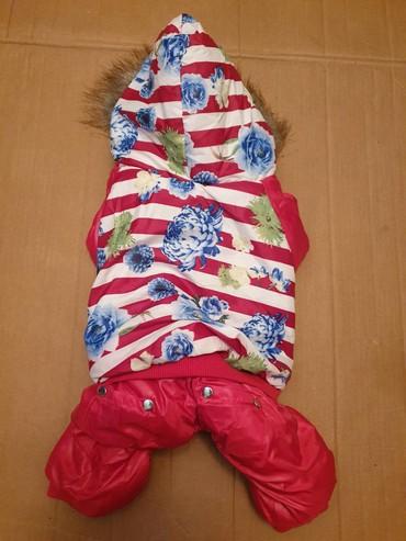 домик для маленькой собаки в Азербайджан: Одежда для собак, утепленная с капюшоном. Длина спинки 31 см., объем