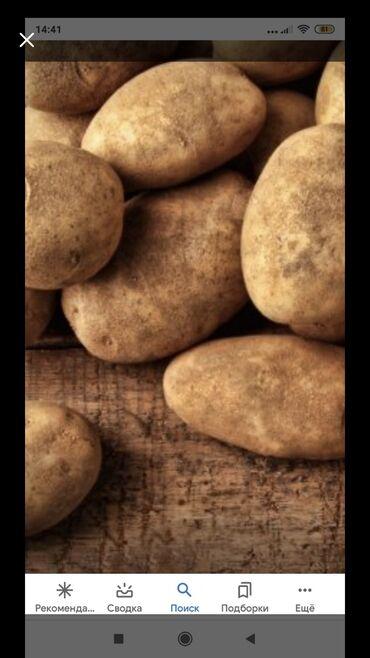 Овощи, фрукты - Кыргызстан: Куплю картофель для себя 25 мешков