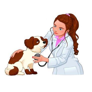 Услуги ветеринара - Кыргызстан: Ветеринарные услуги есть вызов на дом  Вакцинация  Стрижка Лечение