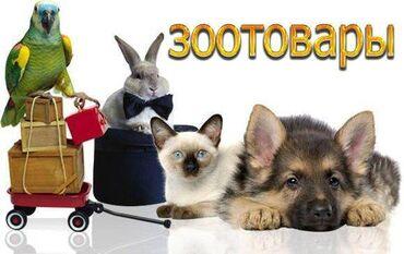 1077 объявлений: Зоотовары для разных животных