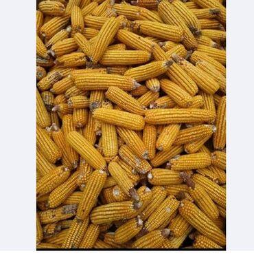 72 объявлений | ЖИВОТНЫЕ: Куплю кукурузу сухой