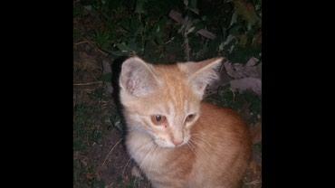 Отдам котика 4 мес.в хорошие руки. в Бишкек