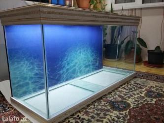 Bakı şəhərində versage akvariumu 200 litrelik