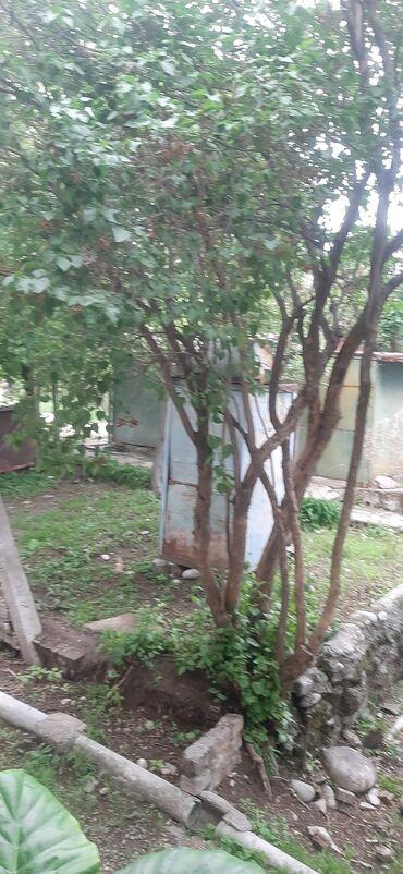 Недвижимость - Арчалы: 1 кв. м 2 комнаты, Гараж