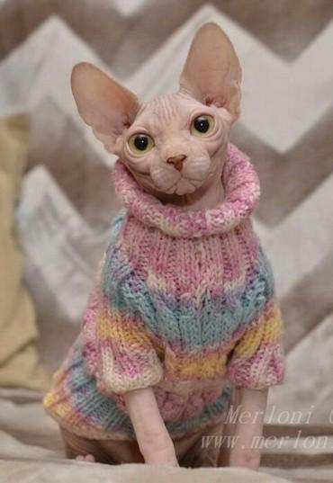 кошка сфинкс с шерстью в Кыргызстан: Возьму за символическую оплату котенка сфинкса, Любовь, заботу, и