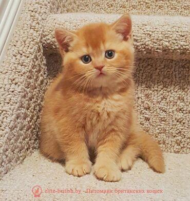 Возьму любого котёнка даром.Желательно рыжего мальчика 1-2 месяцев,при