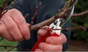 Бытовые услуги - Кыргызстан: Профессиональная обрезка плодовых деревьев. От обрезки дерева, зависит