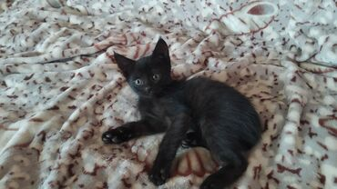 рулетка 50 метров в Кыргызстан: Отдам котят двух-месячных. 1 белый и 1 черный, все мальчики. Адрес