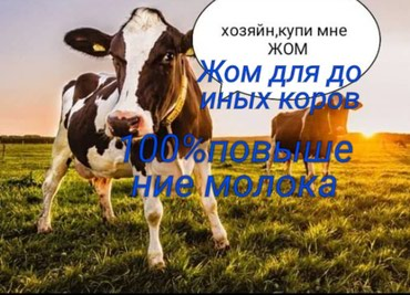 ЖОМ ЖОМ  для доиных коров 100% повышение молока в Бишкек