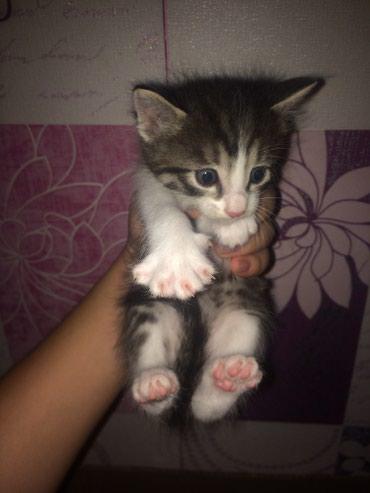 Отдам даром котят в хорошие ручки!!! в Лебединовка