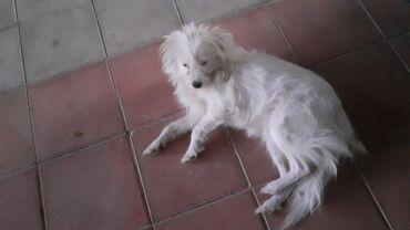 Животные - Геранбой: Собаки