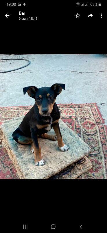 """Фонд помощи животным """"Добрые руки"""" ищет хозяина для щенка- девочки. К"""