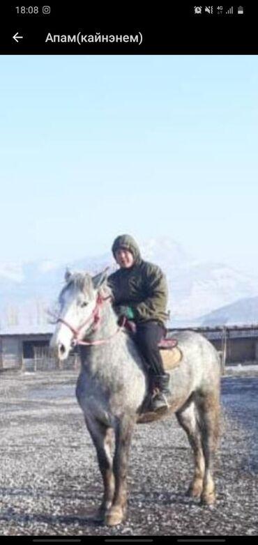 Продаю | Конь (самец) | Конный спорт | Осеменитель