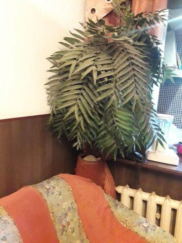 Продаю исскуственую пальму без горшка
