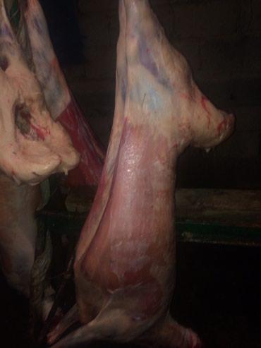 Продаю мясо баранов доставка по в Кант