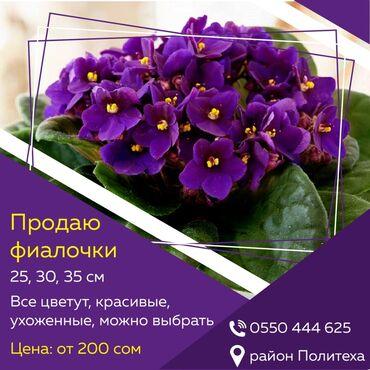 """вечернее платье в пол синего цвета в Кыргызстан: Фиалки """"Поль баньян""""  Домашние, ухоженные, все цветут. Можно выбрать"""
