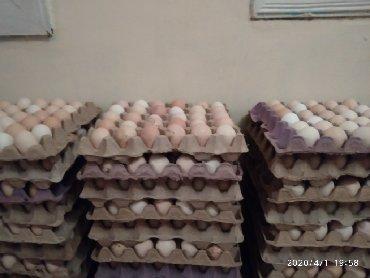 Kənd yumurtası Lokbatan dairəsi və meyvəli bazarina dastavka edirik