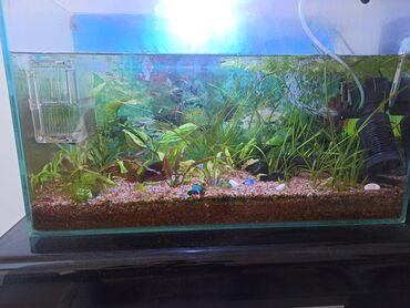 Продаю аквариум 80 литров со всеми необходимыми, грунт, растения много