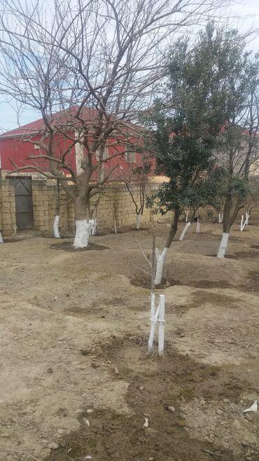 torpaq satışı - Sumqayıt: Satış 10 sot Kənd təsərrüfatı mülkiyyətçidən