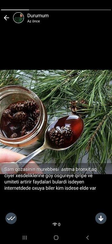 encir murebbesi - Azərbaycan: Şam qozasinin murebbesi goy osgireye bronxlara aq ciyere qan aliqi