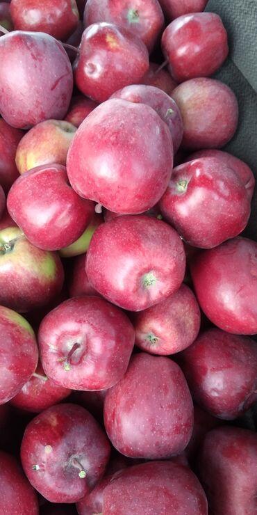 квартиры в балыкчы in Кыргызстан | БАТИРЛЕРДИ САТУУ: Продаю яблоки оптом привосход крипсон цена договорная