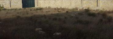 Bakı şəhərində Albalıliq(vişnyovka) kupçali(cıxarışlı) yol kenarinda vayenni
