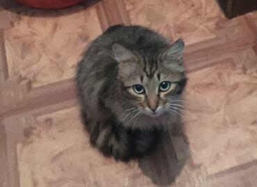 Нужен дом для Котика. Зовут Космос. Возраст 11 месяцев. Был спасён мес