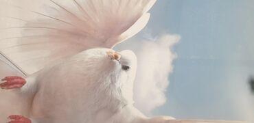 Услуги - Чаек: Натяжные потолки небо цветы голубь