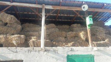 Продаю сено, клевера и ячмень. в Бишкек