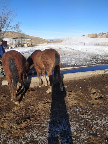 дрон с камерой купить в Кыргызстан: Тай Сатып Алам  Куплю тайчика