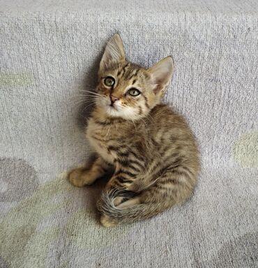Отдам даром - Кыргызстан: Отдам котеек в добрые и хорошие руки. Три котика и одна кошечка, очень