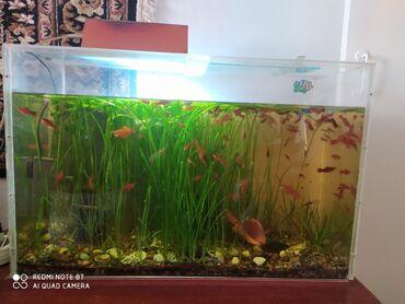 Продаю аквариум из оргстекла вместе с рыбками. 120 литров