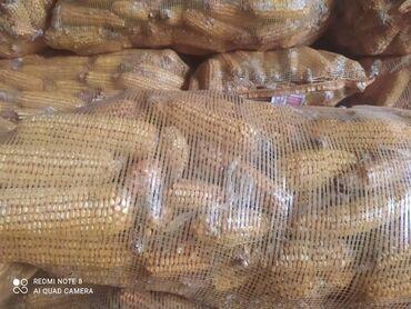 42 объявлений | ЖИВОТНЫЕ: Продаю кукурузу в початках . Сорт местный крупная сухая, качество