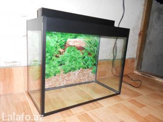 Bakı şəhərində Akvarium teze 50 litrelik