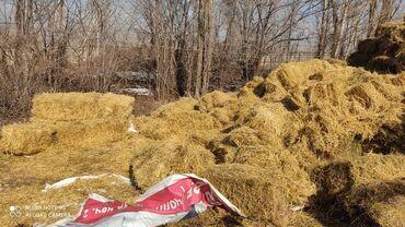 цена бенгальского кота в Кыргызстан: Саман тюк сатам