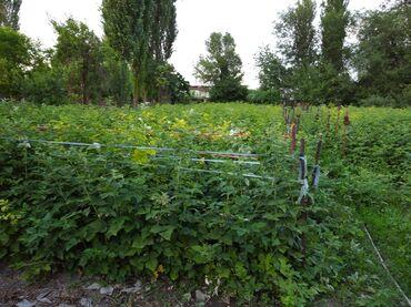 Работа - Новопокровка: Требуется девушка для работы по огороду. Прополка травы, сбор малины