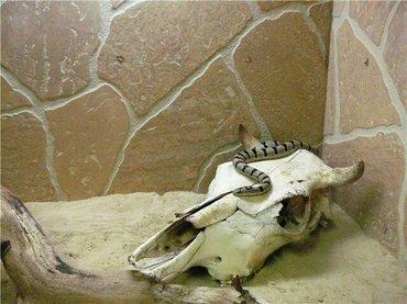 Аквариумы - Кыргызстан: Террариумы для экзотических питомцев