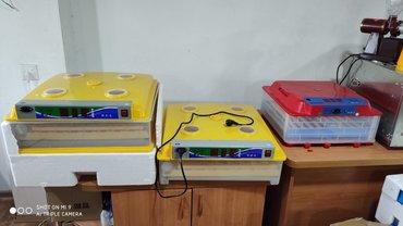 Inkubator inqibator inkibator inqubatorOrjinal zavod istehsali