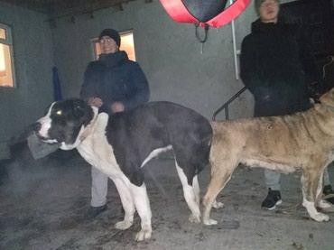 Кабель для вязки шикарный бойцовой в Бишкек