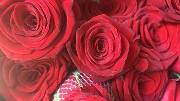 Дом и сад - Кыргызстан: Продаю розы Ташкент  50см  60см 80см 1 м