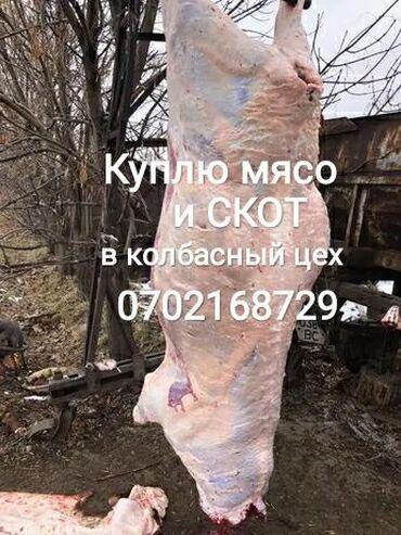 аксесуары для животных в Кыргызстан: Куплю скот в колбасный цех любой упитанности и возраста