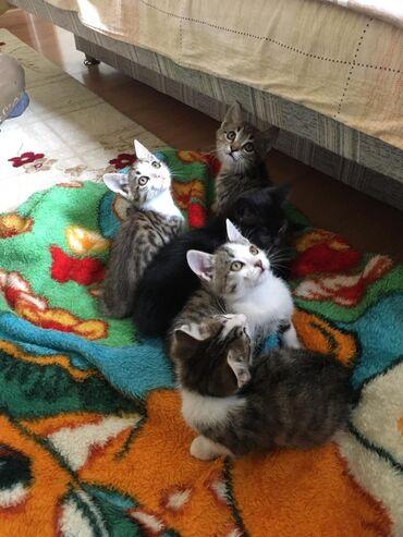 37 объявлений | ЖИВОТНЫЕ: Отдадим котят в добрые руки!!!