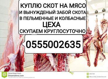 веб камера с микрофоном для компьютера купить в Кыргызстан: Куплю на мясо в колбасные цеха работаем круглосуточно