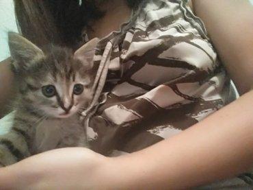 Отдам даром. котята-мышеловки. в Бишкек